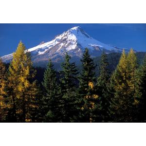 フリー写真, 風景, 自然, 森林, 樹木, 山, フッド山, アメリカの風景, オレゴン州