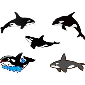 フリーイラスト, ベクター画像, AI, 動物, 哺乳類, シャチ, ジャンプ(動物)
