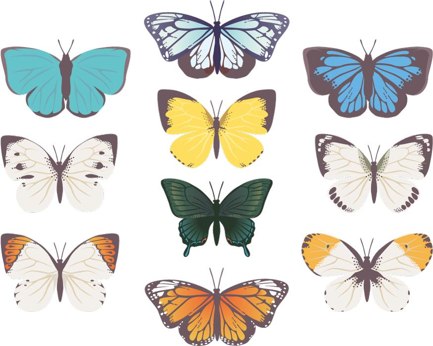 フリーイラスト 10種類の蝶のセット
