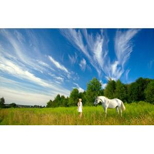 フリー写真, 人物, 女性, 外国人女性, 人と風景, 人と動物, 動物, 哺乳類, 馬(ウマ), 白馬, 青空, 雲