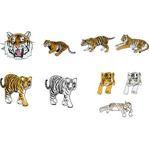 フリーイラスト, ベクター画像, AI, 動物, 哺乳類, 虎(トラ), ホワイトタイガー, 子供(動物), 走る(動物), 動物の顔, 怒る(動物)