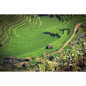 フリー写真, 風景, 水田(田んぼ), 棚田, 田舎, ベトナムの風景, 緑色(グリーン)