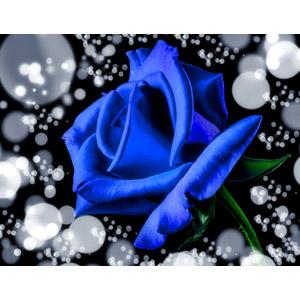 フリー写真, 植物, 花, 薔薇(バラ), 青色の花, フォトレタッチ, 玉ボケ
