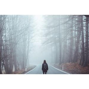 フリー写真, 風景, 森林, 樹木, 道路, 霧(霞), チェコの風景, 人と風景, 女性, 後ろ姿