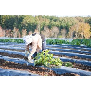 フリー写真, 人物, シニア女性, 祖母(おばあさん), 農業, 農家(農民), 畑, 仕事, 職業, 田舎