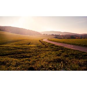 フリー写真, 風景, 牧草地, 小道, 太陽光(日光), 田舎