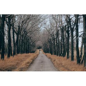 フリー写真, 風景, 田舎, 樹木, 並木道, 小道, カナダの風景, アルバータ州
