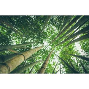 フリー写真, 風景, 自然, 竹林, 竹(タケ), 緑色(グリーン)