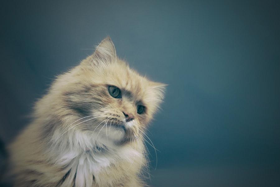 フリー写真 斜めを向いている猫