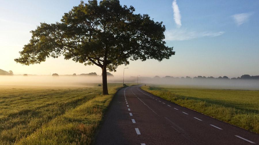 フリー写真 木と霧のかかる田舎道の風景