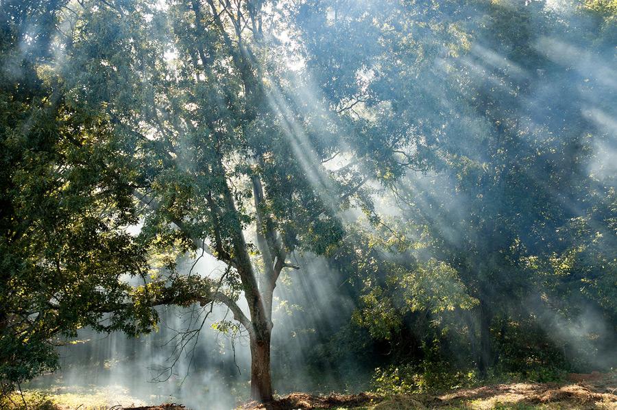 フリー写真 木と木漏れ日の風景