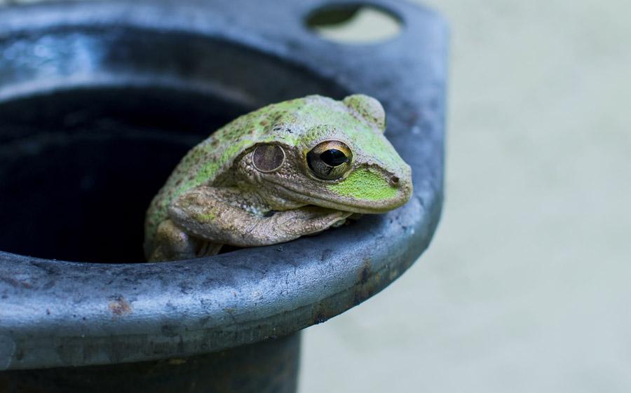 フリー写真 上から見下ろしているカエル