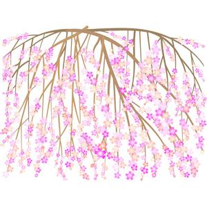 フリーイラスト, ベクター画像, AI, 背景, 植物, 花, しだれ桜, ピンク色の花, 桜(サクラ), 春, 枝