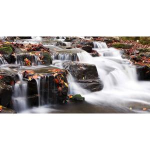 フリー写真, 風景, 自然, 河川, 落葉(落ち葉), 秋, 渓流