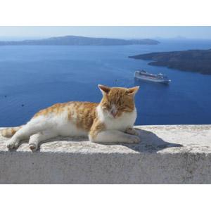 フリー写真, 動物, 哺乳類, 猫(ネコ), 茶白猫, 目を閉じる(動物), 海, エーゲ海, サントリーニ島(ティーラ島), ギリシャの風景