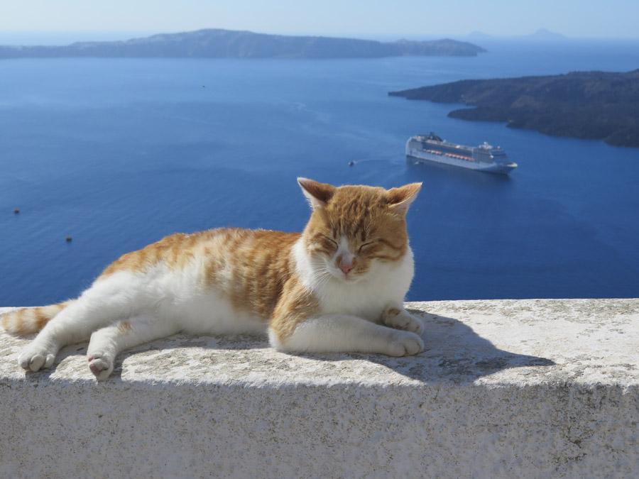 フリー写真 エーゲ海の海と休んでいる茶白猫