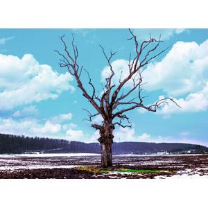 フリー写真, 風景, 自然, 樹木, 枯れ木, 雪, 冬, 青空, 雲, アメリカの風景, メリーランド州