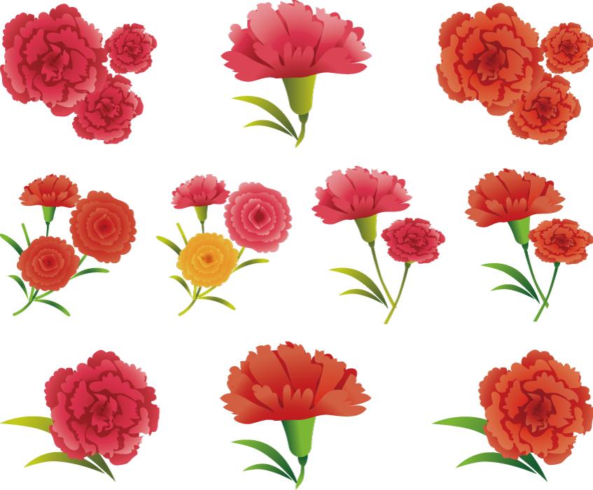 フリーイラスト 10種類のカーネーションの花のセット