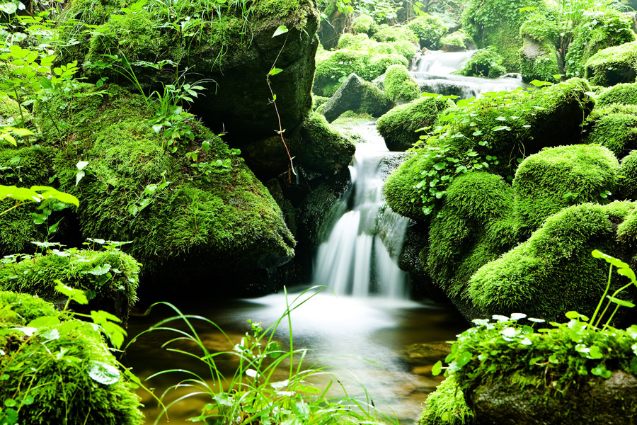 フリー写真 渓流と小さな滝の風景