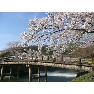 フリー写真, 風景, 建造物, 橋, 花, 桜(サクラ), 春, 日本の風景, 京都府