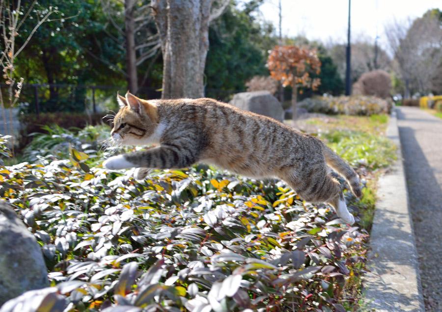 フリー写真 花壇をジャンプする猫