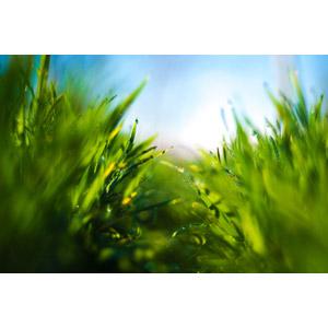 フリー写真, 風景, 自然, 植物, 雑草, 水滴(雫)