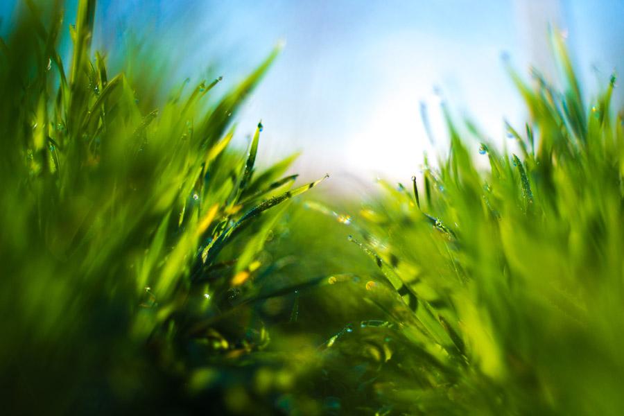 フリー写真 雫の付いた緑色の草
