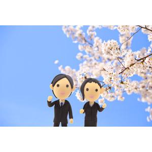 フリー写真, 人形, 仕事, 職業, ビジネス, ビジネスマン, ビジネスウーマン, OL(オフィスレディ), 新入社員, 花, 桜(サクラ), 春