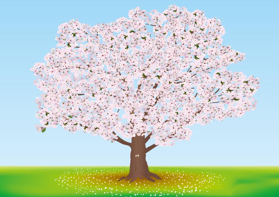 フリーイラスト 満開の一本桜
