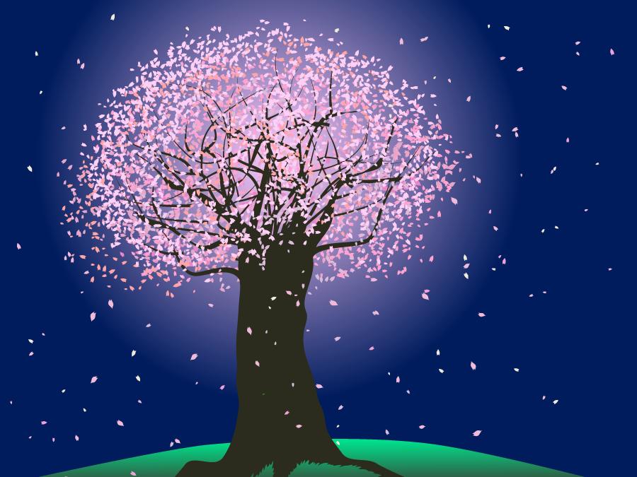 フリーイラスト 夜桜の風景