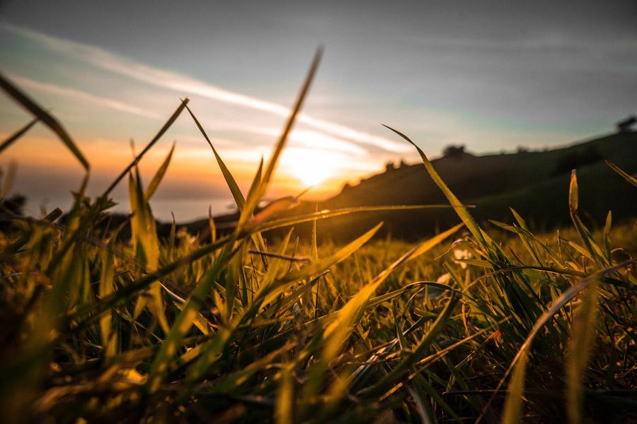 フリー写真 夕日と草むらの風景