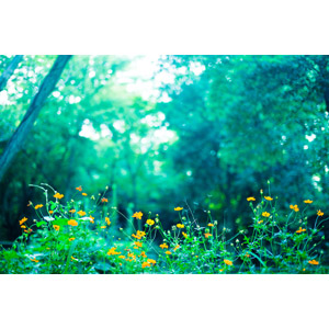 フリー写真, 風景, 森林, 植物, 花, オレンジ色の花