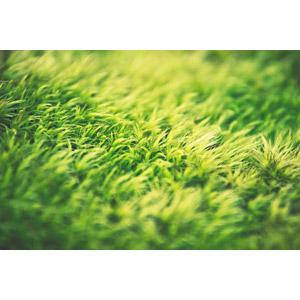 フリー写真, 植物, 雑草, 緑色(グリーン)