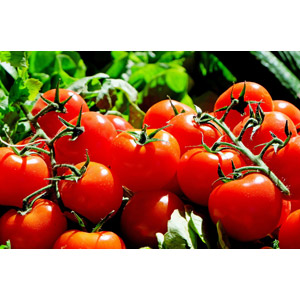 フリー写真, 食べ物(食料), 野菜, トマト