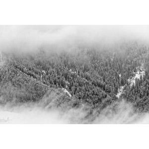 フリー写真, 風景, 自然, 森林, 雪, 冬, 霧(霞), オーストリアの風景