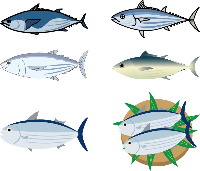 フリーイラスト 6種類の鰹のセット