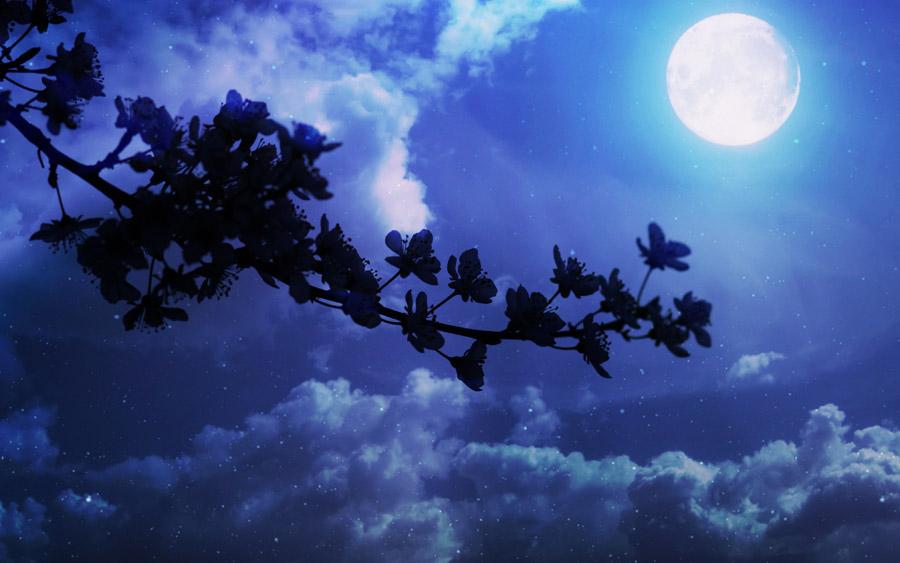 フリー写真 木花と幻想的な月の風景