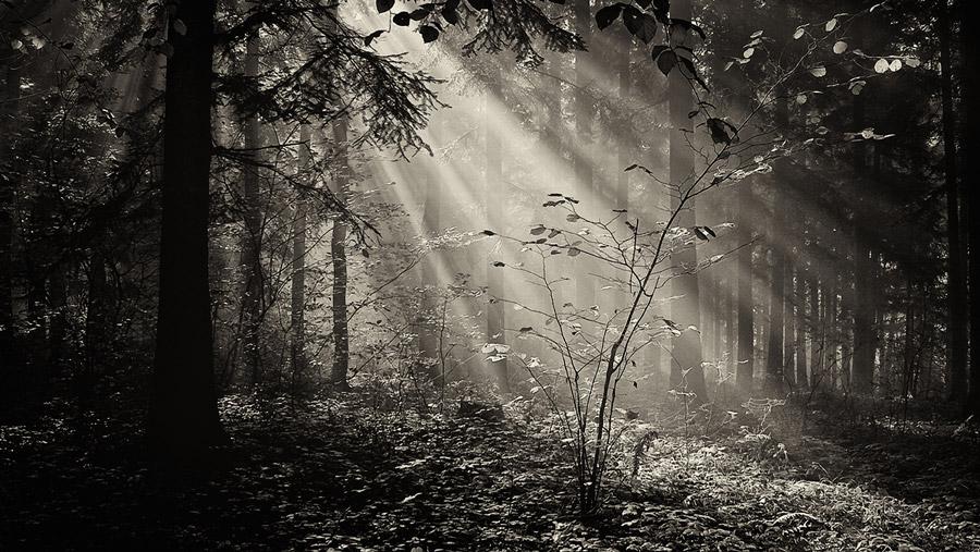 フリー写真 森の中の木漏れ日の風景