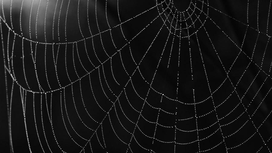 フリー写真 水滴の付いたクモの巣