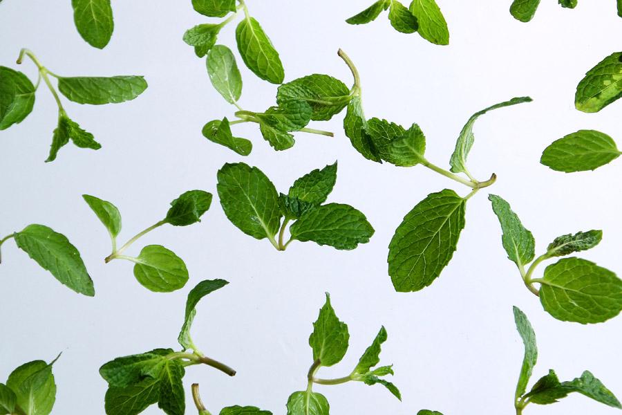 フリー写真 スペアミントの葉