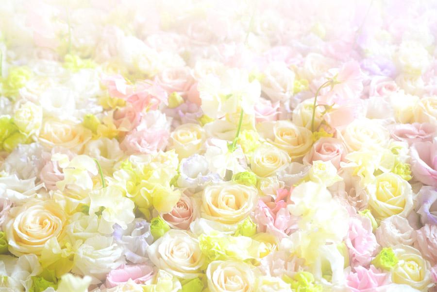 フリー写真 敷き詰められたカラフルなバラの花