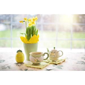 フリー写真, 植物, 花, 水仙(スイセン), 黄色の花, 飲み物(飲料), 紅茶, ティーカップ, ティータイム, 急須, 太陽光(日光)