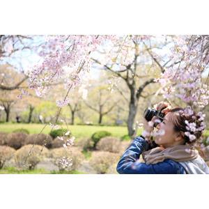 フリー写真, 人物, 女性, アジア人女性, 日本人, 人と花, 桜(サクラ), 春, 写真撮影, カメラ, 一眼レフカメラ