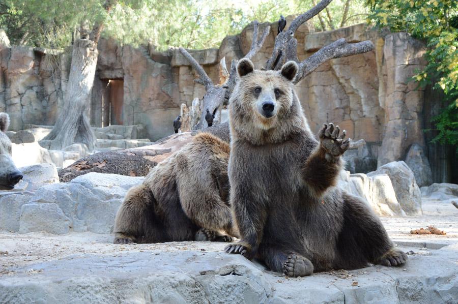フリー写真 手を上げて挨拶する熊