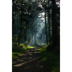フリー写真, 風景, 森林, 樹木, 小道, 木漏れ日, 太陽光(日光), アメリカの風景, ワシントン州