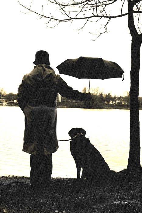 フリー写真 愛犬に傘を差す飼い主