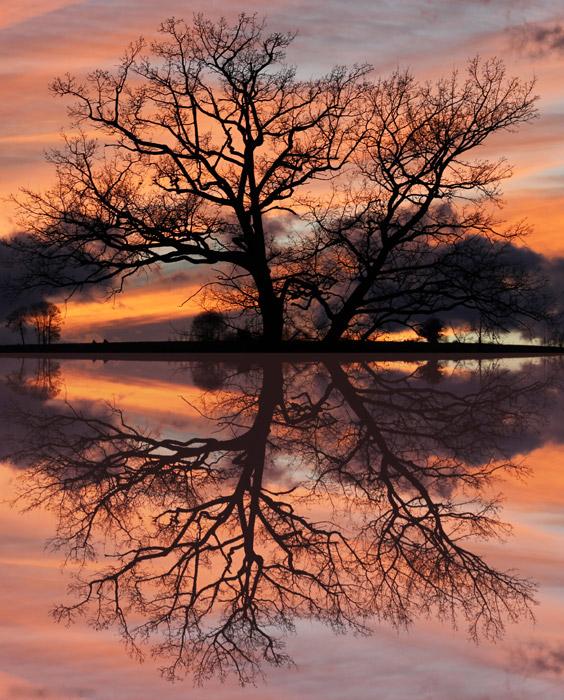 フリー写真 夕焼けと湖に映る木の風景