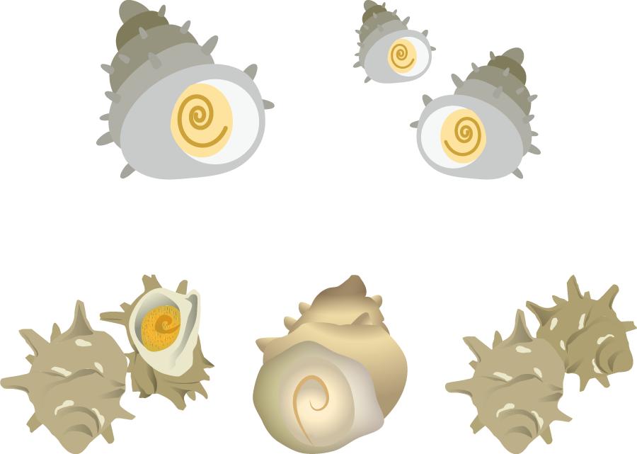フリーイラスト 5種類のサザエのセット