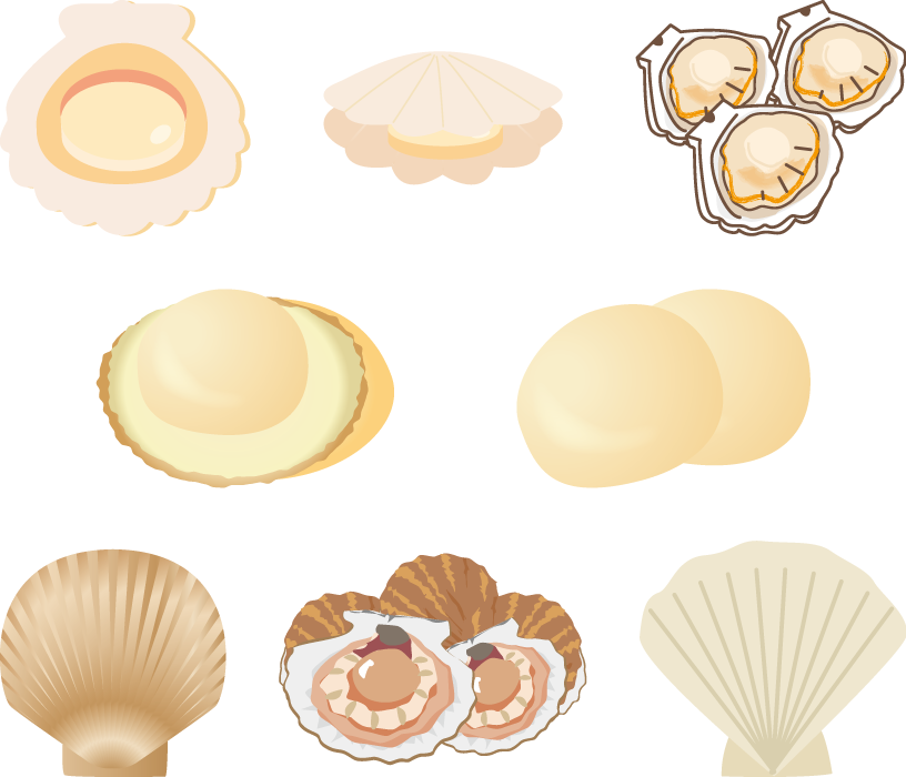 フリーイラスト 8種類のホタテ貝のセット