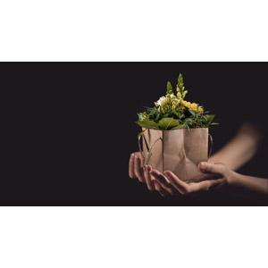 フリー写真, 人体, 手, 差し出す, 黒背景, 植物, 花, プレゼント